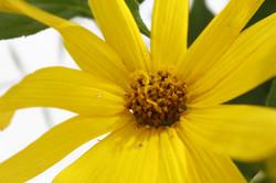 病院の中には、いつも旬なお花が飾られています