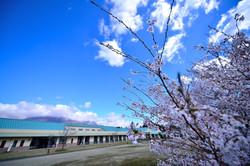 桜 ヴァル・ド・グラスくじゅうの4月