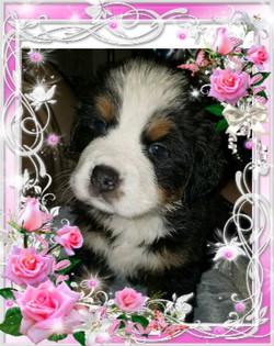 Female Puppy