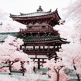 viaje-a-japon-belleza.png