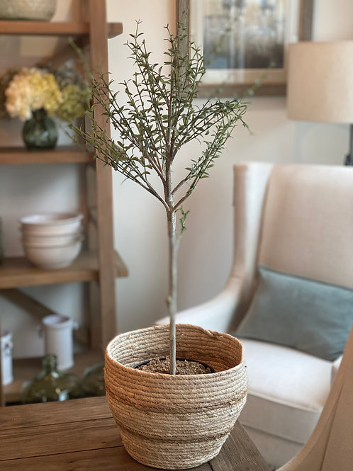 "30"" Tall Myrtle Tree in Basket"
