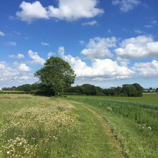 School Farm Trail