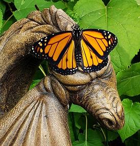 Monarch on Dragon.jpg