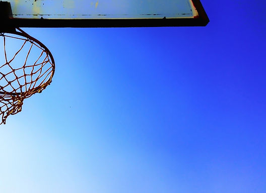 Basket Bee