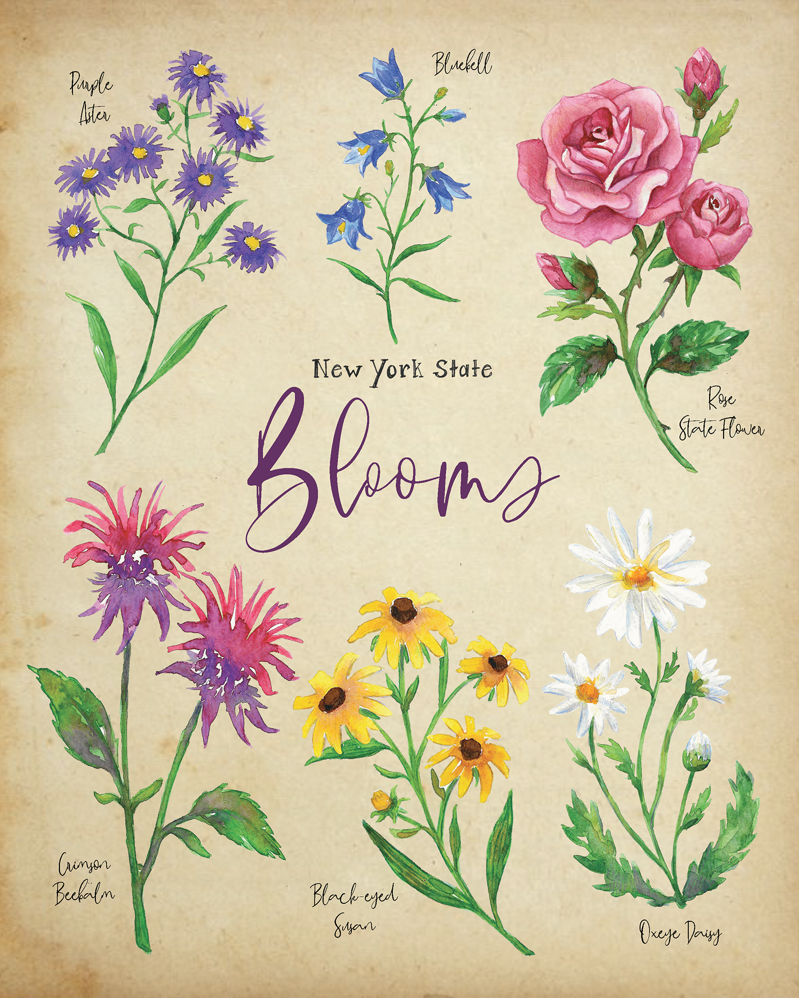 New York State Blooms Notecard