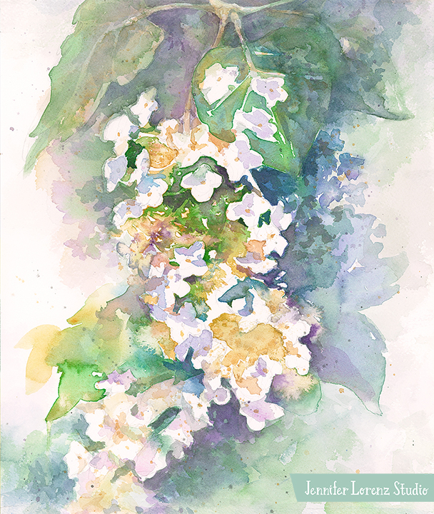 Oak Hydrangea