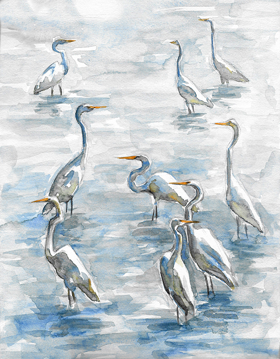Egrets in Summer