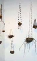 Marcella Stasa | Upton, MA Bird Work