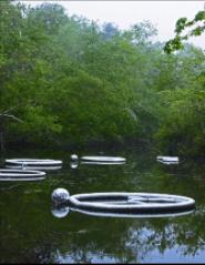Lisa Barthelson   Rutland, MA  Water Rings