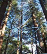 Lynne Laib-Havighurst   Essex,MA Tree Lines