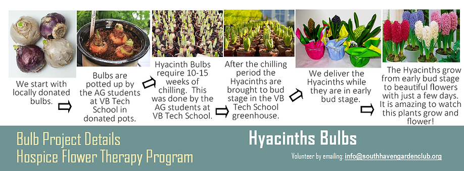 Hospice bulb project hyacinth.png