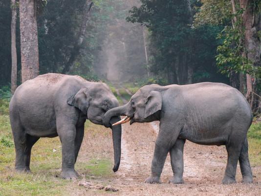 Een olifantentweeling geboren: voor het eerst in 80 jaar