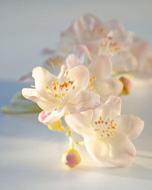 fleurs pommier rose pour la coiffure (6)