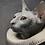 Thumbnail: Le chat plateau