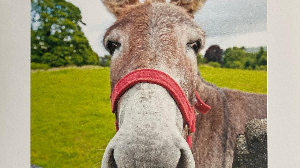 The Donkey-Blank