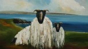Wild Atlantic Sheep by Padraig McCaul