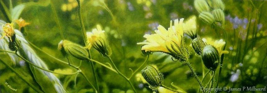 Spotlight on the meadow (Acrylic)
