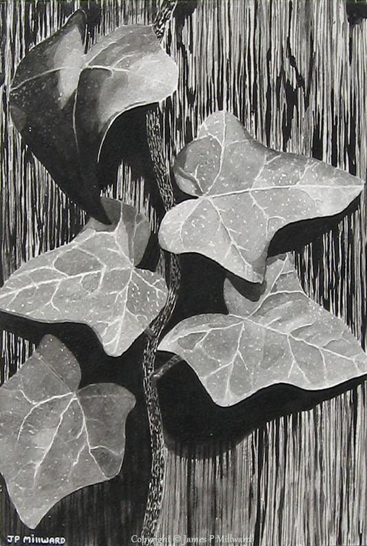 Ivy on the gatepost (graphite)