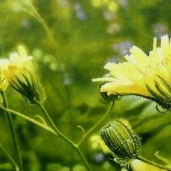 Spotlight on the meadow