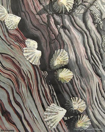 Shells (of Mothecombe) (Original)