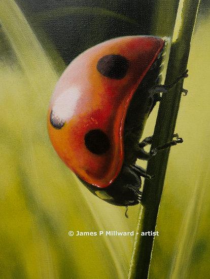 The darling bug of may (Original)