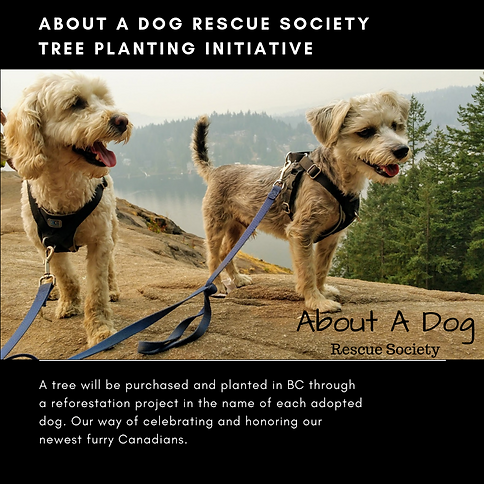 About A Dog Rescue Society Tree planting