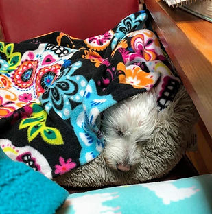 blankets1.jpg