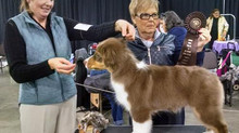 Lock son takes Puppy Group 2
