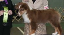 Lock son takes Puppy Group 3