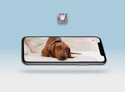 Miami Advertising Agency vet app_edited.