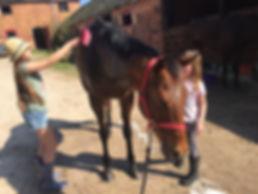 bathtime-horse.JPG