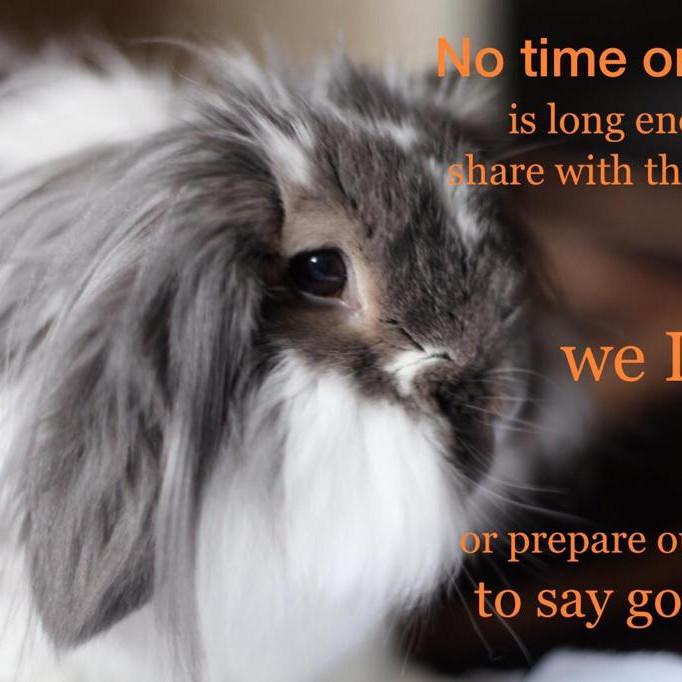 Pet Bereavement Workshop 18th October