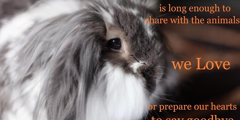 Pet Bereavement Workshop 25th September