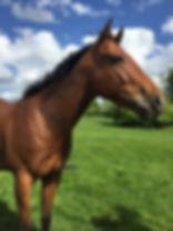 loki the ex racehorse