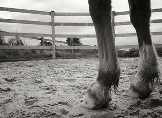 Natural Horse keeping