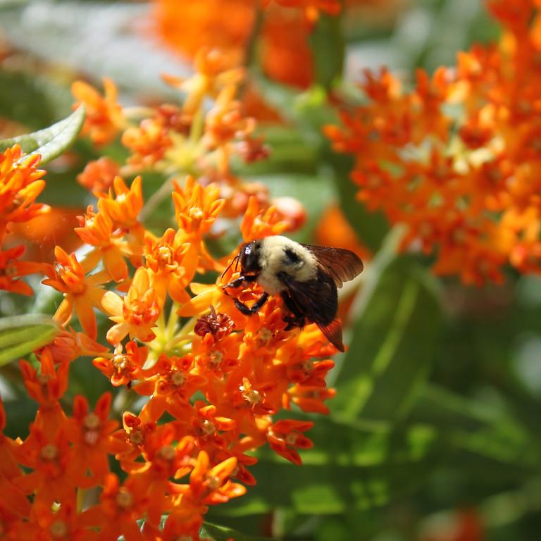 Increase Pollinator Habitat