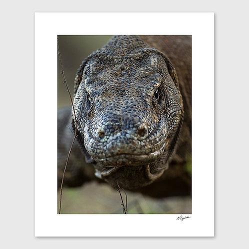 Tirage Fine Art 40x50 cm - Dragon Cadré Serré