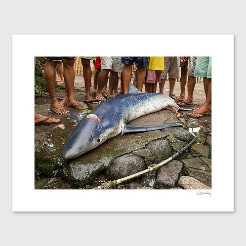 Tirage Fine Art 40x50 cm - Requin Bleu