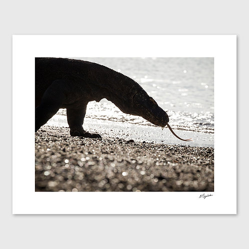 Tirage Fine Art 40x50 cm - Dragon Silhouette