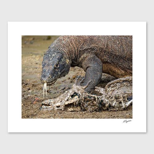 Tirage Fine Art 40x50 cm - Dragon Prédation