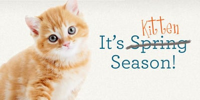 Kitty Post: It's Kitten Season!  How Can You Help? By Sallie Rhodes