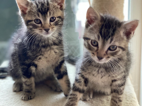 Kitty Post December 2020: Why Two Kittens Are Better Than One By Sallie Rhodes