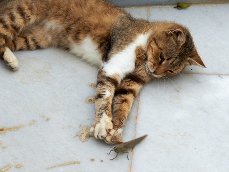 Kitty Post: Those Pesky Insects By Sallie Rhodes