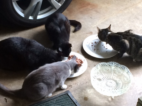 Beltsville Community Cats Comes to Town!!
