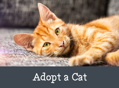 Kitty Post: Tips on Adopting a Kitten or Cat By Sallie Rhodes