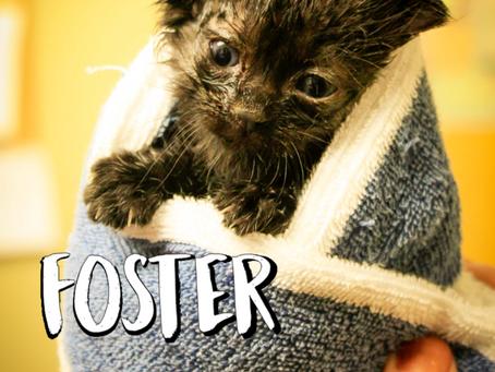 Kittie Post: It's Kitten Season—Consider Fostering