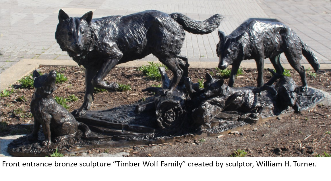 2 Timber wolves