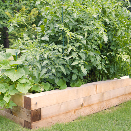 How and Why to Build a Raised Garden Bed This Season