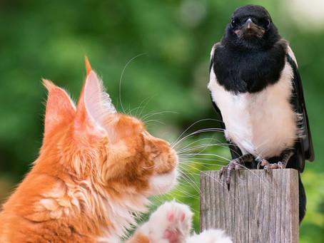 Kitty Post: PURRedator