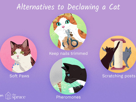 Kitty Post: Declawing A Cat is Cruel By Sallie Rhodes